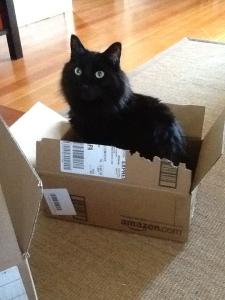 fergus in box