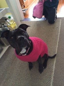 roxy in sweater