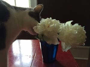 francesandflower