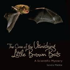 case of vanishing brown bats
