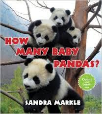 how many baby pandas