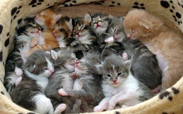 all the kittens