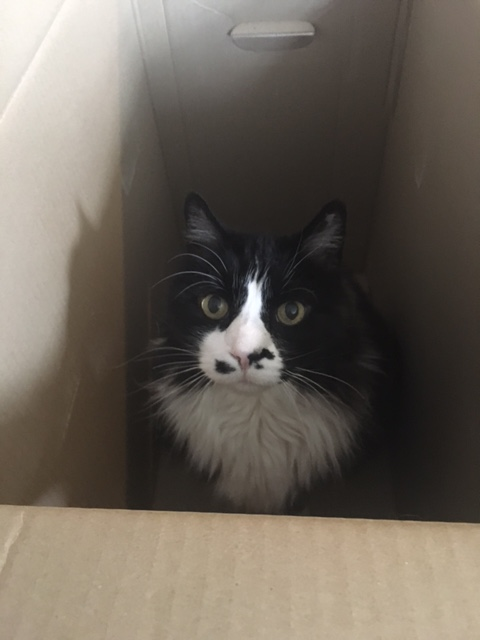 puck in box