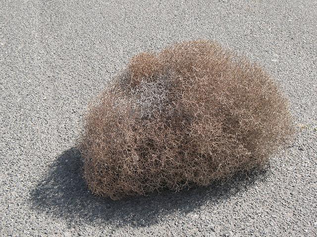 tumbleweed by lisa risager