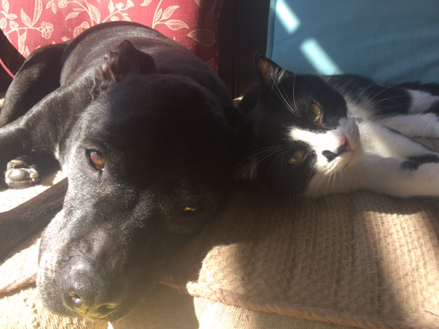 roxy and zorro.JPG