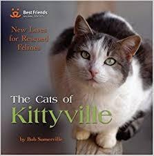 cats of kittyville