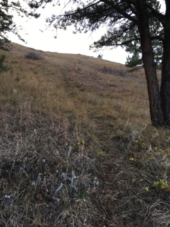 rising prairie